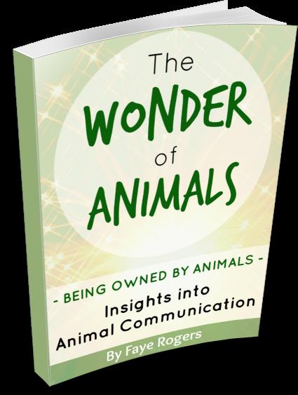 Animal_Communication_NZ_eBook_Wonder_of_Animals