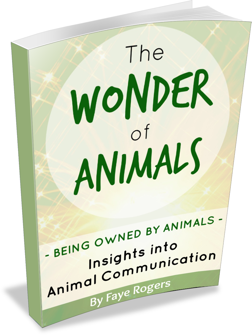 Animal_Communication_NZ_eBook_Wonder_of_Animals