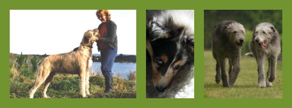 PicMonkey Collage 11