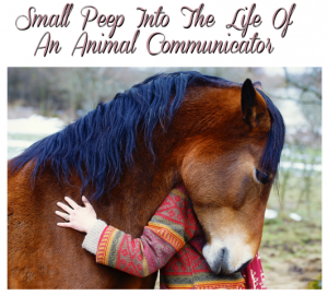 The Life of An Animal Communicator